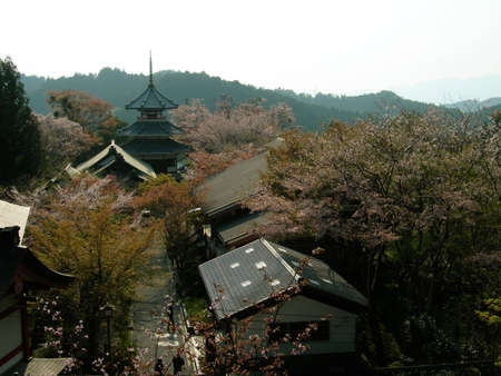 Cherry blossoms at the temple in Yoshino, a famous spot for flower viewing in Japan