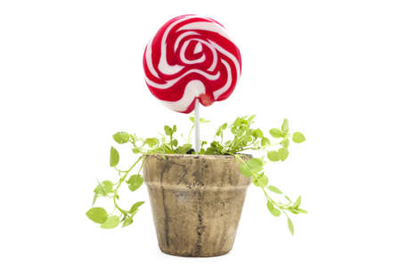 Potted lollipop isolated on white background photo