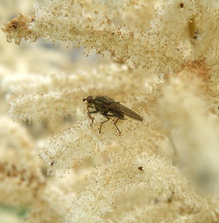 insectiside: fly