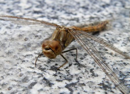 animal life - nice detail of a dragon fly photo