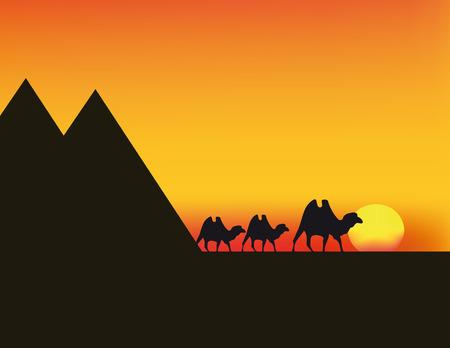 animales del desierto: Ilustraci�n agradable de la puesta de sol en Egipto con camellos y cielo rojo  Vectores