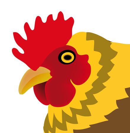 nice illustration of chicken isolated on white background illustration