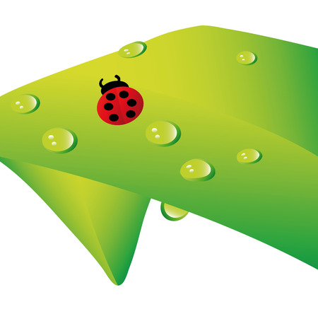 lady bug and water drops on plant isolated over white background Vector