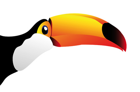 toucan: toucan isolated on white background - you can cut this image and use it for your images