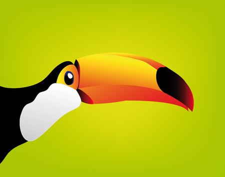 tucan: toucan isolated on white background - you can cut this image and use it for your images