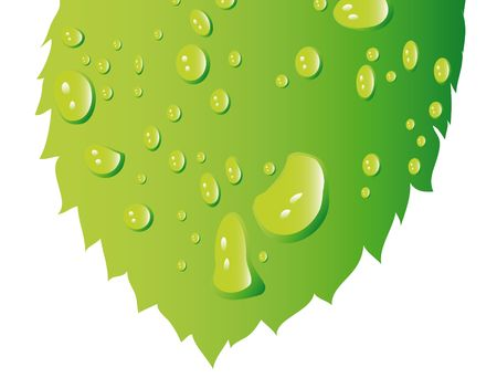 leaf with water drops isolated on background Stock Photo - 6206996