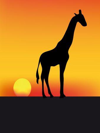 giraffe silhouette: nice illustration of giraffe at sunset in africa