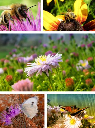 nice collage with detail of flowers and insect Stock Photo - 7186635