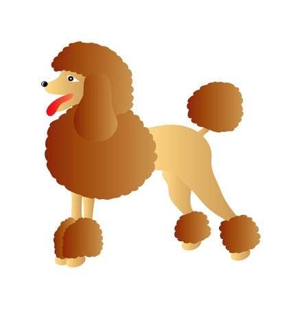 brown and black dog face: nice illustration of brown poodle isolated on white background Illustration