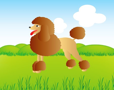 poodle in wild nature  Vector