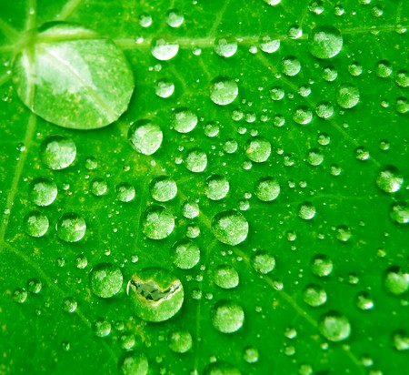 Macro detail of water drops on green leaf photo