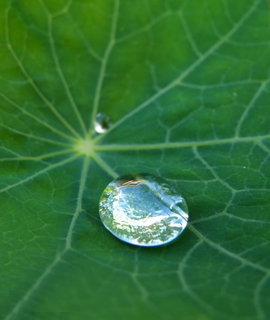 macro detail of water drop on green leaf photo