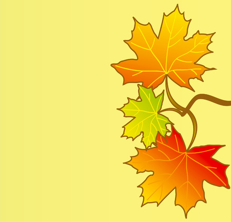 marple: Illustration red, orange and green marple leafs isolated over yellow background