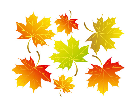 Illustration red, orange and green marple leafs isolated over white background