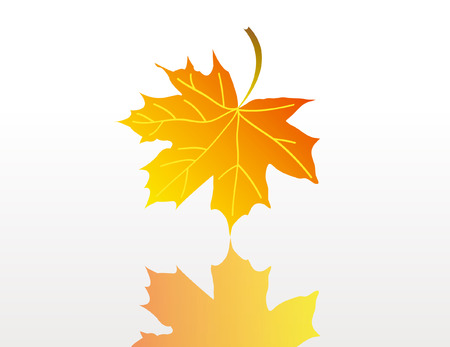 Illustration red, orange and green marple leafs isolated over white background with reflection Vector