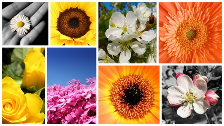 beautifull summer collage with a lot of flowers and plants photo