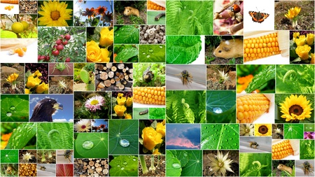 beautifull summer collage with a lot of flowers and plants Stock Photo - 9555224