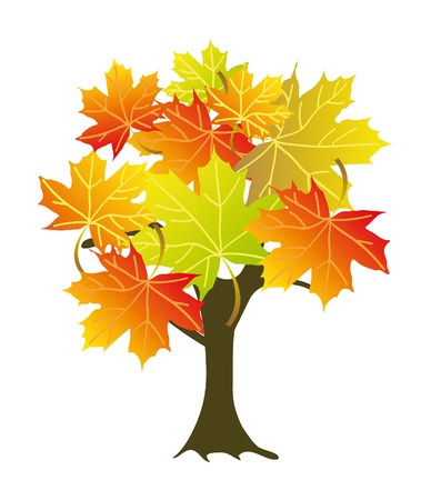 seasonal symbol: abstract colorful maple tree. Isolation over white background. Illustration