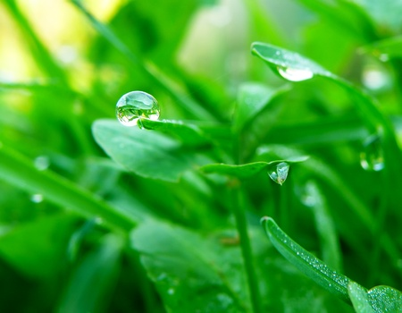 nice macro detail of water drop on leaf or green grass photo