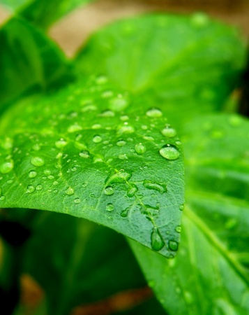 Macro detail of water drops on green leaf Banque d'images