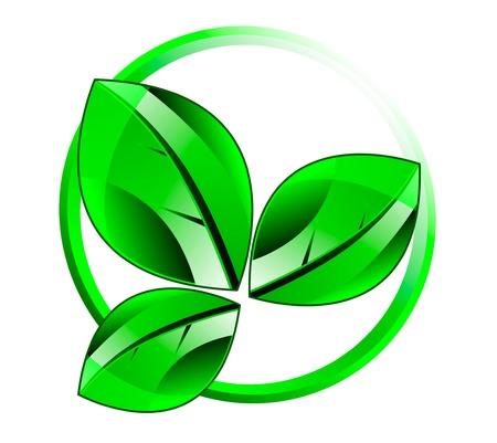 illustration of autumn symbol  Leaf isolation over white background  Ecology theme