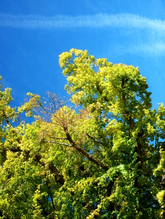 gree: Detail of old gree in autumn with blue sky on background
