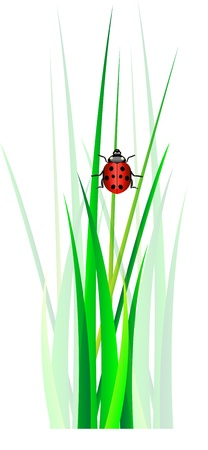 Vector ladybug in green grass  Isolation over white background  Vector
