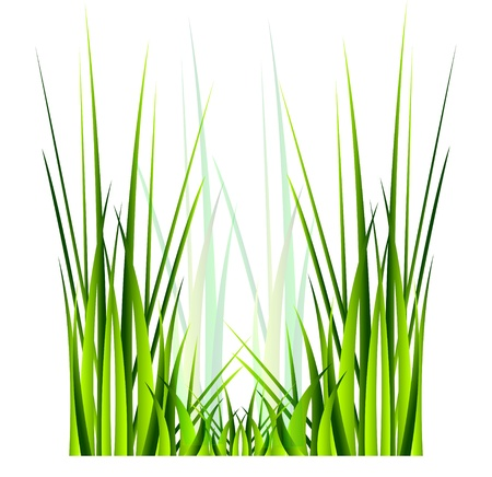 isolation: Vector green grass  Isolation over white background