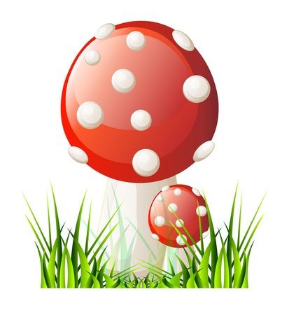 isolation: Vector red mushroom. Isolation over white background.