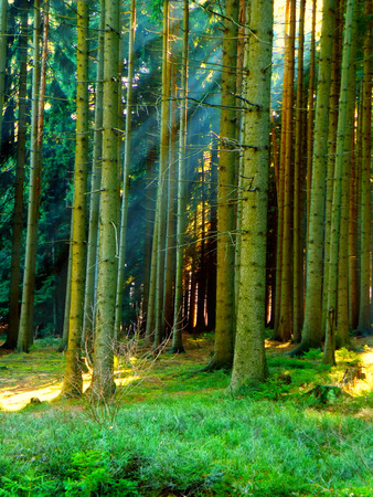 Beautiful place for relaxation. Forest with sun rays in summer time. Relax and meditation site. photo