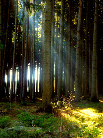 Beautiful place for relaxation. Forest with sun rays in summer time. Relax and meditation site.