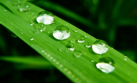 Macro closeup detail of water drop on green leaf or plant. Clear rain. Stock Photo - 29304099