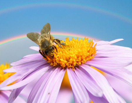 Detail closeup Image of beautiful violet flower and bee photo
