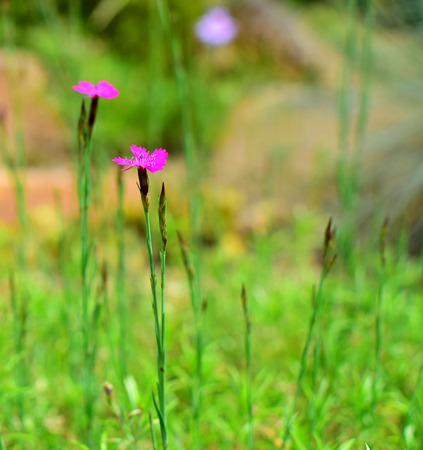 Closeup detail of flower in garden in summer time photo