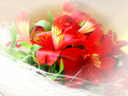 Detail of red flowers with white border photo
