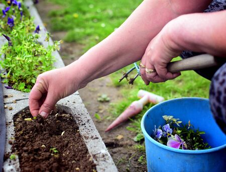 Unrecognizable woman ripping out weeds in a garden using her hands.