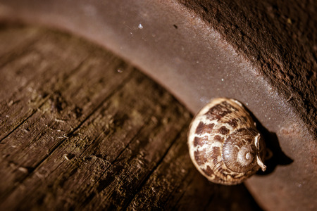 oxidized: Macro of snail sleeping on oxidized surface