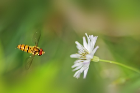 Bees are going to land in flowers and plants 免版税图像