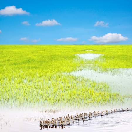 Blue sky and the green grass, colorful Stock Photo - 14930428