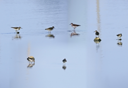 plover: Plover and Wetland