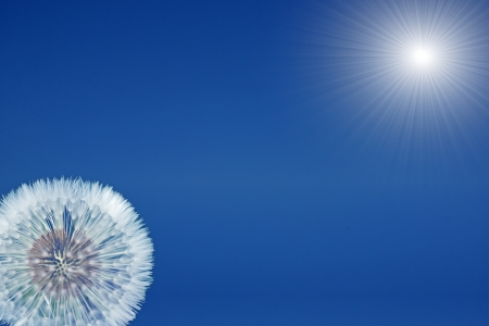 Blue sky and sun with dandelion photo