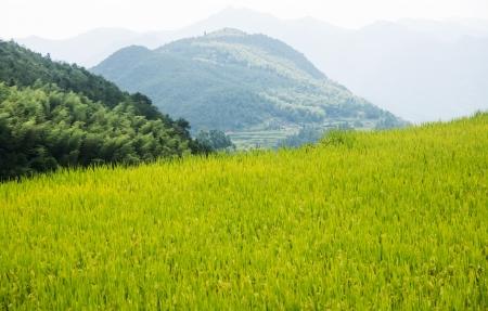 streamlet: China Wenzhou landscape - mountain scenery Shooting in China Zhejiang Wenzhou Zeya