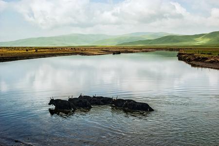 China Sichuan Hongyuan County, Summer 免版税图像