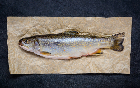 freshwater: Fresh Raw Trout Freshwater Fish on Paper