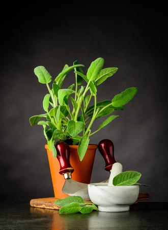 Still Life with Sage Herb Plant and Mezzaluna Herb Chopper