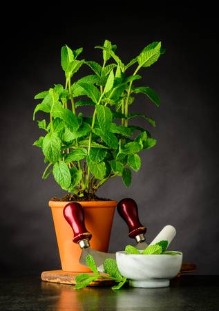 Pint Plant Growing in Pottery Pot with Pestle and Mortar and Mezzaluna Herb Chopper Kitchen Utensils Stock Photo