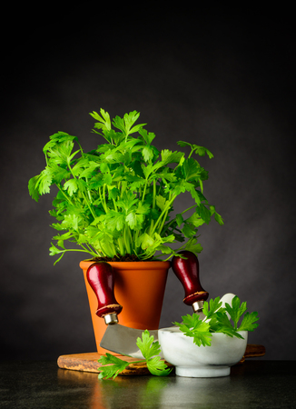 Still Life with Parsley Herb Plant and Pestle and Mortar on Dark Background Stock Photo