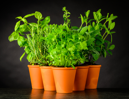 Different Types of Culinary Herbs Growing in Pottery Pots on Dark Background