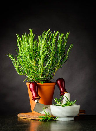 Green Rosemary Herb growing in a Pottery Pot with Mezzaluna Herb Choper and Pestle and Mortar Foto de archivo