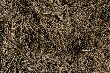 Texture of withered grass. Lifeless background image. Siberian soil. Macro photo.